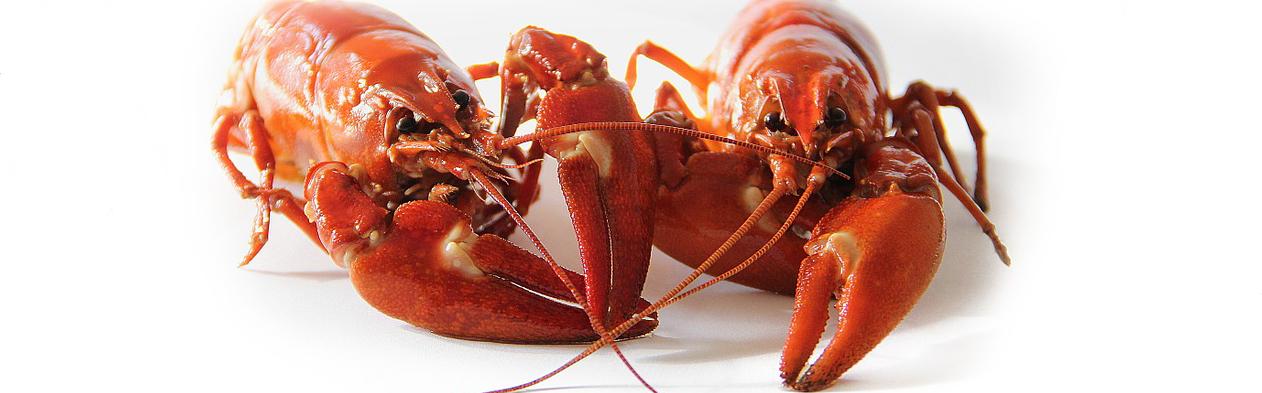 crayfish-423251_960_720